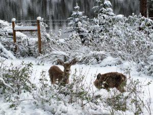Denver Foothills Ranches For Sale