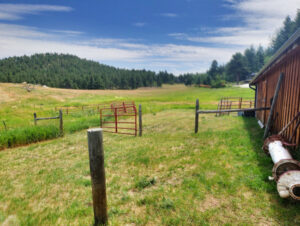Huge Pasture, Meadow and Grazing