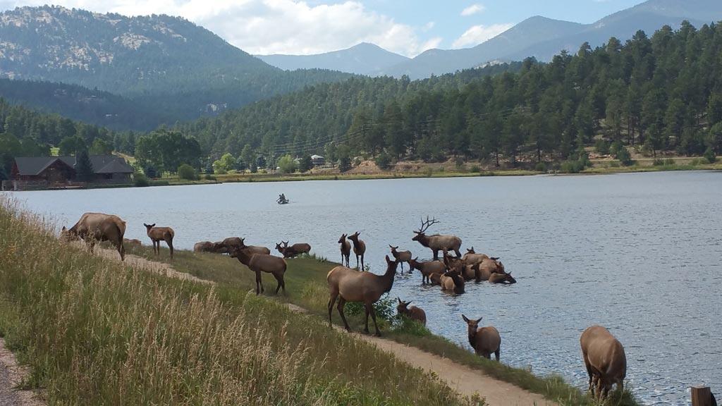 Evergreen CO Elk Evergreen Lake