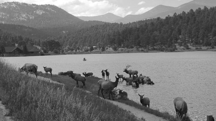 Evergreen-CO-Elk-Evergreen-Lake